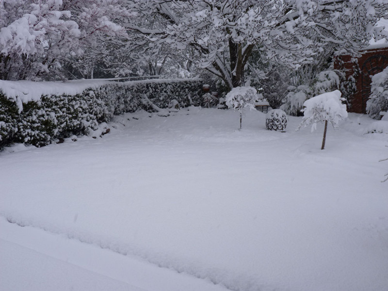 Snow - front yard